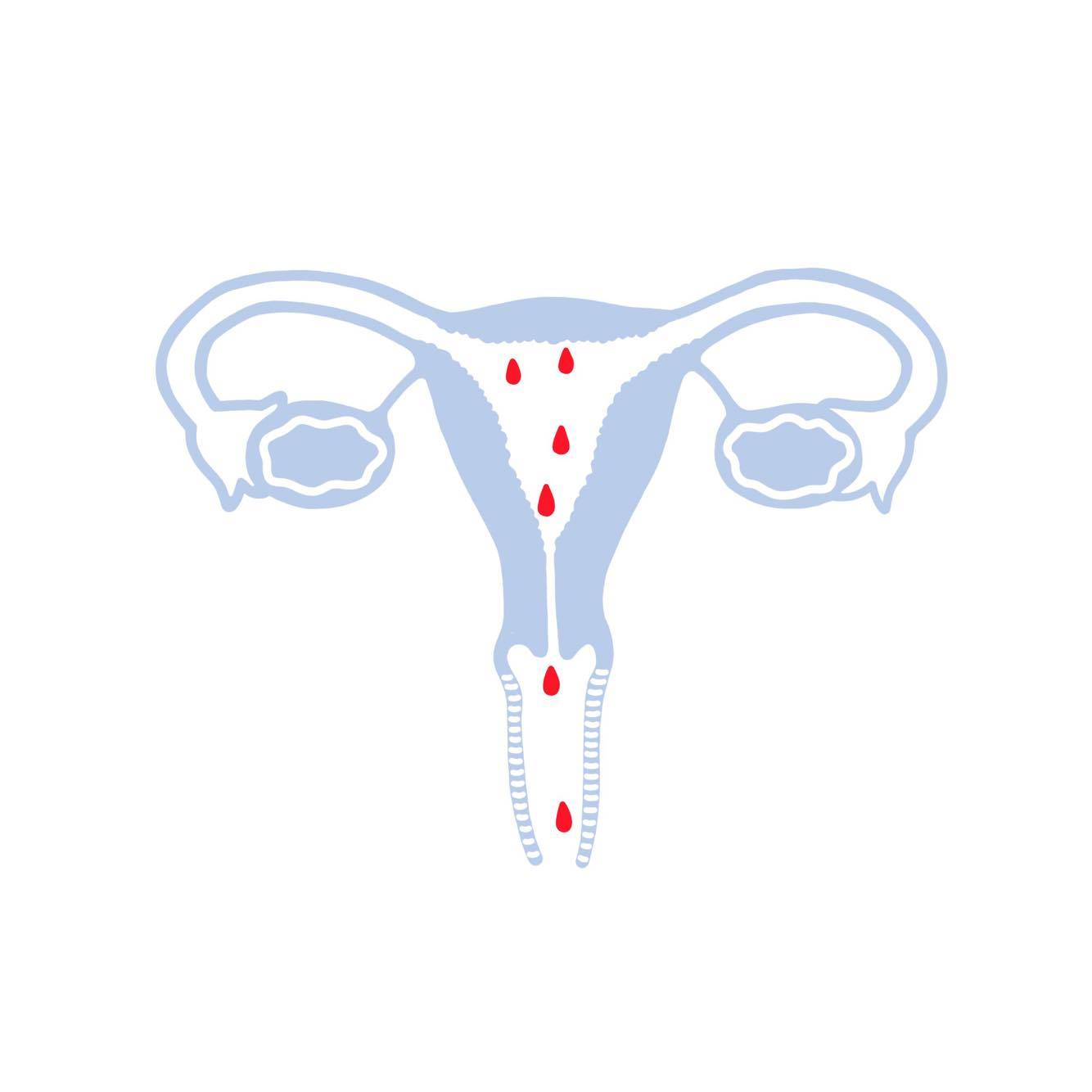 Deconstructing the Menstrual Cycle